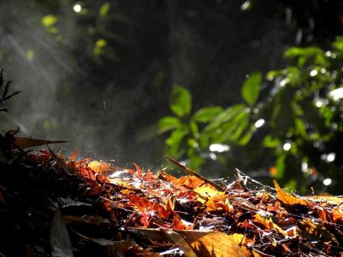 差しこむ朝の太陽と湯気立つ落ち葉