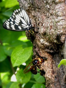 樹液に群がる虫達.jpg