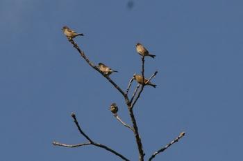 野鳥.jpg